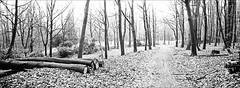 da legst di darnieder (fluffisch) Tags: fluffisch darmstadt frankenstein eberstadt hasselblad xpan panorama 45mmf40 rangefinder messsucher analog film kodak trix400