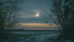 2019-01-26_10 (vond.one) Tags: vond g80 g85 panasonic lumix 1260 természet nature tél winter