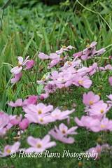 St John's (158) (Framemaker 2014) Tags: st johns newfoundland labrador canada municipal botantical gardens pippy park
