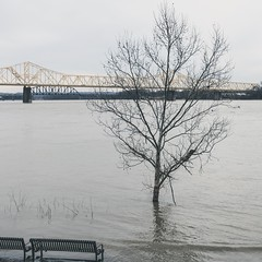 George Rogers Clark Memorial Bridge, Louisville 3/13/19 (Sharon Mollerus) Tags: cfptig19