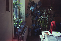 Late-afternoon. (35mm) | Exp. Kodak Gold Ultra 400. (samuel.musungayi) Tags: film 35mm 24x36 135 pellicule pelicula negativo negative négatif scan et analog argentique expired photography photographie fotografia samuel musungayi grain kodak gold color olympus om zuiko 400 ultra life light samuelmusungayi