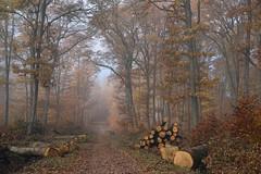 Bois d'Automne (Excalibur67) Tags: nikon d750 sigma globalvision art 24105f4dgoshsma arbres trees forest foréts automne autumn brume mist vosgesdunord nature chemin