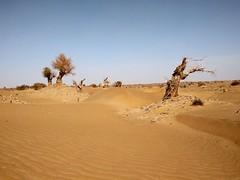 Por la cuenca del Deriya. Desierto de Taklamakán. China (escandio) Tags: taklamakan keriya china2018 china 2018 2 xinqian