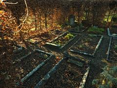 in the herb garden (Johnson Cameraface) Tags: 2018 december autumn olympus omde1 em1 micro43 mzuiko 1240mm f28 johnsoncameraface yorkshire yorkcemetery cemetery graveyard graves headstone northyorkshire herb herbgarden hedge