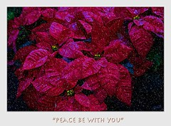 And the Word became flesh, and dwelt among us (Christina's World!) Tags: christmas holiday 2018 red redflowers poinsettia plant nature painterly card colorful colors garden blackbackground dramatic flowers digitalpainting dark exotic flower frame joy winter snow weather peace stilllife challenge1780~seasonalholidaycards~theawardtree~