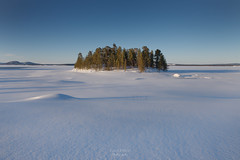 Island in the Snow (Luca Enrico Photography) Tags: sweden winter cold freddo inverno lapponia lappland snow neve arjeplog landscape d750 nikon