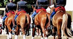 "bootsservice 18 890071 (bootsservice) Tags: armée army uniforme uniformes uniform uniforms cavalerie cavalry cavalier cavaliers rider riders cheval chevaux horse horses bottes boots ""riding boots"" weston eperons spurs gants gloves gendarme gendarmerie militaire military ""garde républicaine"" paris"