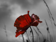 Remember. (Lindsey1611) Tags: remembranceday remember heroes sacrifice givepeaceachance worldpeace poppy compassion