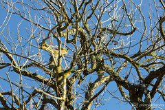 the old tree (photos4dreams) Tags: gersprenz münster hessen germany naturschutz nabu naturschutzgebiet photos4dreams p4d photos4dreamz nature river bach flus naherholung hanx