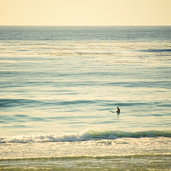 Golden Ocean Serenity (american_flat) Tags: beach blue coast coastal ocean oceans photo photographs photography sea shore sid17927 sportgamesandentertainment sunset surfboards surfers water waves