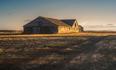 Catching the light (L E Dye) Tags: 2018 alberta barn canada d750 ledye nikon abandoned fall prairie rural