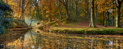 Herfst in Nederland (zsnajorrah) Tags: nature landscape landscapephotography trees moss water pond stillwater reflection earlymorning sunlight sunray autumn fall leaves fence forest clearing canon 7dmarkii ef1635mmf4l netherlands overveen elswout explore