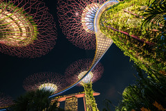 Singapore - utopia (Rafael Zenon Wagner) Tags: singapur super bäume psychedelisch trip licht konzert nacht nikon d810 laowa12mmf28zerod 12mm singapore trees psychedelic light concert night superweitwinkel ultrawideangle
