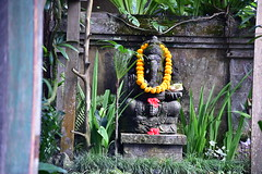 Statue of the Hindu elephant headed god Ganesha at the entrance to Bliss (shankar s.) Tags: seasia indonesia java bali islandparadise baliisland touristdestination hotel lodgings accomodation resort entrance blissubudspaandbungalow ubudbali reception garland statue idol hindufaith hindureligion hinduism prayer shrine garden landscaping