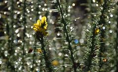 My week macro: Out of focus poetry/ Poesia desenfocada (PURIFM) Tags: eau water light bokeh ngc nikkor nikon nature