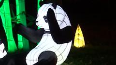 13 Paradis des Pandas (christine.petitjean) Tags: panda gaillac festivaldeslanternes2018 chine tang