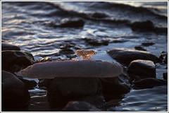 20181226_5951_Sea (Enn Raav) Tags: pakripoolsaar paldiski meri sea winter