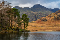 Blea Tarn to Langdale 3 (alan.dphotos) Tags: rock rocks trees forest wood woods branches tree moss green leaves leaf waterfall heather copper grass hill whitewater derwent buttermere fell sunrays lakedistrict