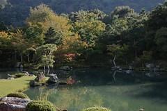 garden (ababhastopographer) Tags: kyoto arashiyama tenryuji garden pond 京都 嵐山 天龍寺 曹源池 庭園 zen 禅 afternoon 午後 西日 sunray 日差し