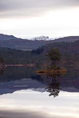 Bekkjavatn øy -|- Lake island (erlingsi) Tags: hafstad reflection lake island fjell mountain tree bekkjevatn førde sunnfjord freshwater