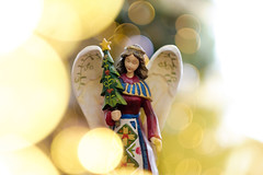 Christmas 2017 (dav.d) Tags: bush daniels family orem
