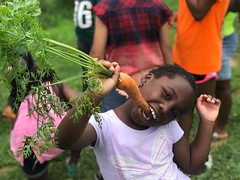Pennypack Farm carrot hunt 2018