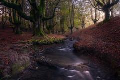Javy Nájera Fotografía (Javy Nájera) Tags: javynájera otoño otzarreta paisvasco vizcaya color hayas hayedo naturaleza paisaje rio autumn landscape