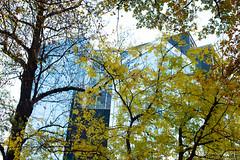 Graz November 2018_Karin Wernig_0017 (Foto-Karin.at) Tags: graz stadtpark austria herbst autumn technic natur dach altstadt überdendächern ginko wind