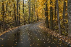 A road thru Clifty (Bernie Kasper (5 million views)) Tags: art berniekasper cliftyfallsstatepark color cliftyfalls d750 effect family fall hiking indiana jeffersoncounty light landscape leaf leaves love madisonindiana madisonindianacliftyfallsstatepark nature nikon naturephotography new outdoors outdoor old outside photography park raw red road statepark travel tree trees unitedstates usa wet