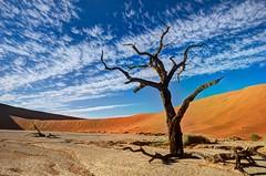 Dead Vlei (Jhaví) Tags: deadvlei namibia sossusvlei desert dunes safari africa trip travel árbol cielo paisaje desierto