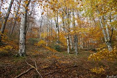 Balade en forêt (xavtad) Tags: foret forest montagne mountain nature feuilles leaves leaf automne autumn arbres trees orange color canon simple mousse rocks france weather balade dimanche sunday