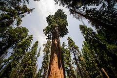 (Federico Pensa) Tags: sequoianationalpark california usa west coast pacific rockies national park sequoia sherman grant sierra nevada