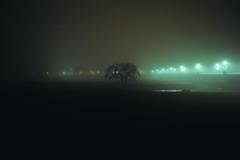 Albero nella nebbia (matteoguidetti) Tags: nebbia fog mist foggy winter night nightwalker trees tree lights nightlights colors notturno nebbioso albero città natura inverno