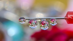 Droplets - 6187 (ΨᗩSᗰIᘉᗴ HᗴᘉS +27 000 000 thx) Tags: water drop droplet red color bokeh canon mp65mm hensyasmine namur belgium europa aaa namuroise look photo friends be yasminehens interest intersting eu fr lanamuroise sliderssunday hss