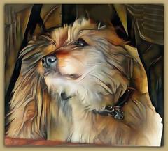 A faithful dog (boeckli) Tags: rx100m6 004578 dog hund animal animals canine tier tiere textures texturen texture textur photoborder rahmen frame ddg topaz painterly deepdreamgenerator faithful treu