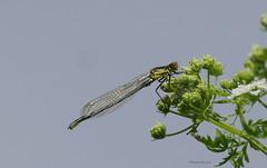 (yvonnepay615) Tags: panasonic lukix gh4 nature rspb lakenheathfen suffolk eastanglia uk