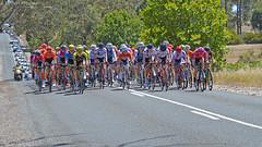 Women's Tour Down Under - Stage 2 - 11/01/2019 (wattscapture) Tags: womens tour down under stage 2 cycling procycling hot nurioopta menglers hill breakaway bicycle bike woman rider