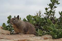 IMG_10933 (mudsharkalex) Tags: california pacificgrove pacificgroveca loverspointpark