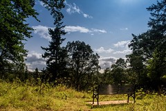 Happy bench Monday ☺️..xx (shona.2) Tags: countryside woodland walk scotland gifford yester eastlothian scenic serene peaceful view summertime trees grass green bench happybenchmonday hbm
