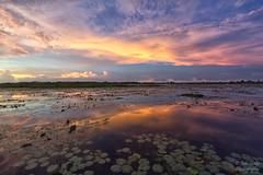 Fogg Dam Reflections (Peedie68) Tags: australia northernterritory nt foggdam sunset reflections water dam clouds
