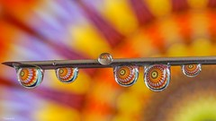 Color - 6437 (ΨᗩSᗰIᘉᗴ HᗴᘉS +42 000 000 thx) Tags: drop droplet sony color needle wter macro colorful belgium europa aaa namuroise look photo friends be wow yasminehens interest eu fr greatphotographers lanamuroise flickering