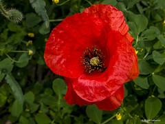 2679  Flores (Ricard Gabarrús) Tags: flores naturaleza natura jardin botanica ricardgabarrus olympus ricgaba