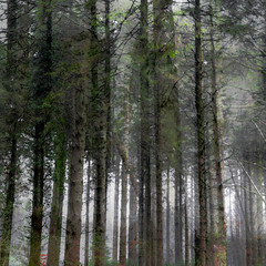 The Plantation (Wayne Elsworth) Tags: icm pines woods multipleexposure trees forest