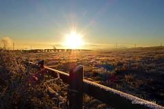 Dalry Frosty Fence1 (g crawford) Tags: frost frosty winter wintery wintry cold weather sky skies garnock valley garnockvalley dalry glengarnock kilbirnie crawford fence ayrshire northayrshire potd pod pictureoftheday 182 herald glasgowherald