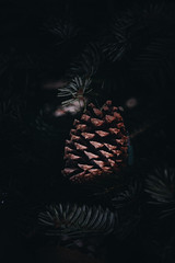 Christmas Tree Pine Cone (Tim Harwick) Tags: christmas tree lights scandinavian green brown burlap pine cone trees holidays plant growth nature leaf no people closeup part focus foreground branch outdoors day beauty coniferous selective color food needle homeiswheretheheartis loveourhome resolutions canon 30d dslr christmaseve christmastree pinecone