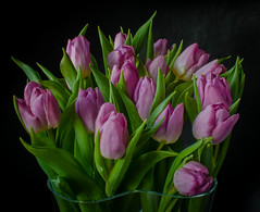 Tulips for the new year (frankmh) Tags: plant flower bouquet tulip hittarp sweden