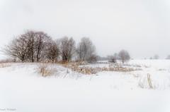 Im Schneesturm in the blizzard (Andi Fritzsch) Tags: winterwonderland winter landscape landscapephotography snow erzgebirge tree pound nature naturephotography blizzard