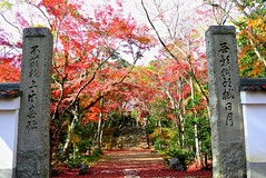 The Gate of Old temple (tez-guitar) Tags: autumn 紅葉 autumn leaves temple kyoto gate garden leicax1 leica