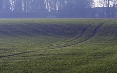 More mining subsidence (Rhubus) Tags: coalmining green grass crop field lines misty mining drop underground coalextraction huge