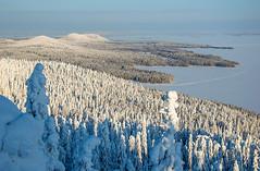 Koli - Finland (Sami Niemeläinen (instagram: santtujns)) Tags: koli suomi finland lieksa pielinen pohjoiskarjala north carelia karelia luonto nature metsä forest nationaö park kansallispuisto outdoors hiking retkeily ulkoilu puu tree tykkylumi snow lumi kansallismaisema